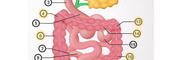 Bloating in the large intestine