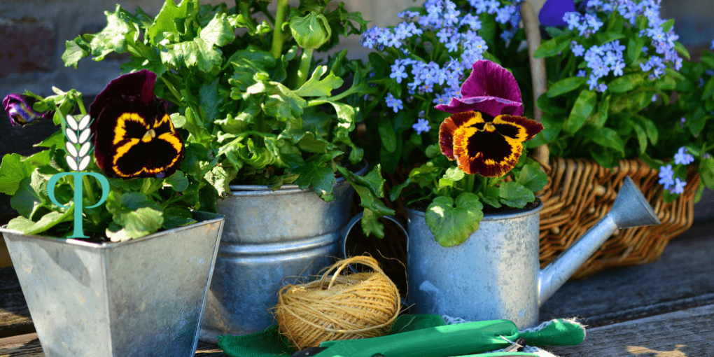 Gardening for Health - the magical benefits explained