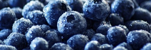 The Top Ten Foods you need to keep your liver healthy