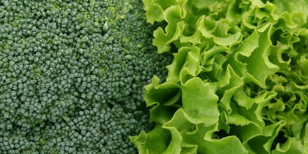 What Benefits does organic food deliver in 2021